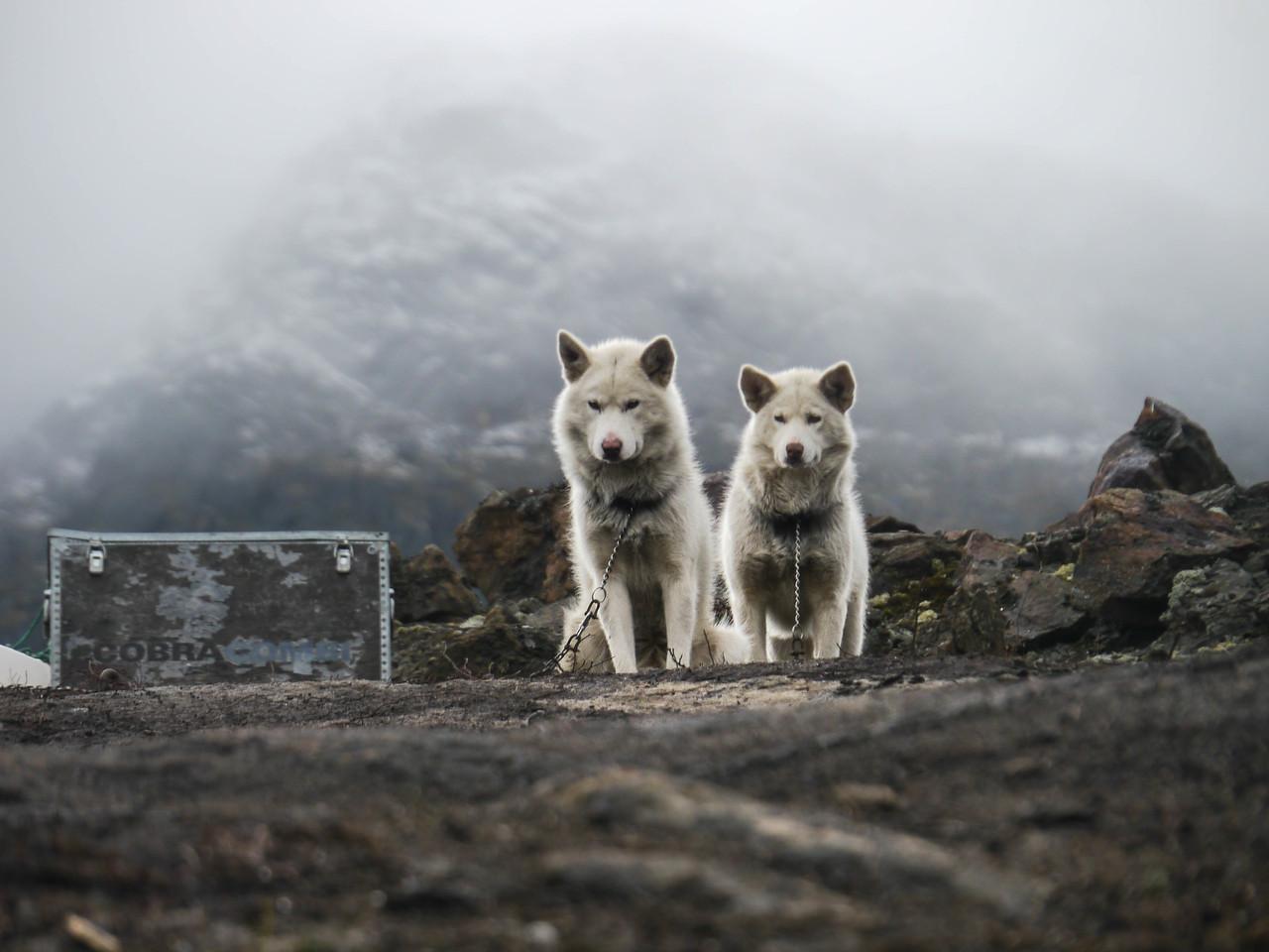 Dog Camp Ilulissat
