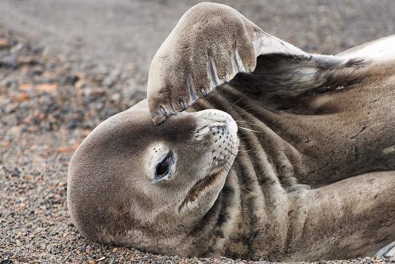 Dozing seal
