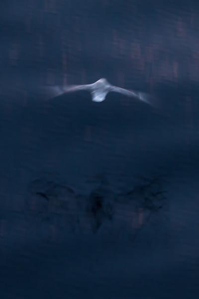 Angel/Ghost II