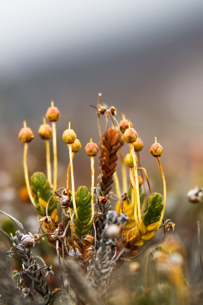 Small plants stretch up to the fading winter Arctic light in Alpefjord, Greenland