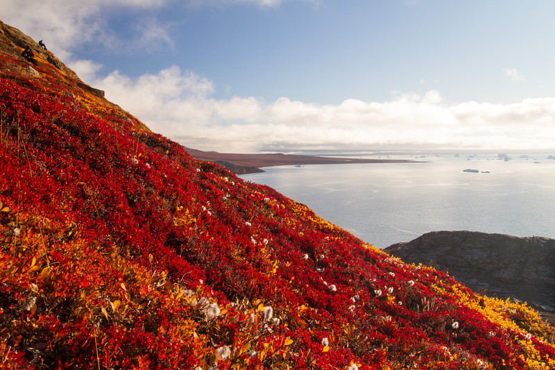 Low lying vegetation explodes out of the slopes around Sydkap in eastern Greenland.