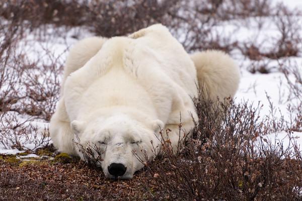Great White Bear Lodge, Churchill Wildlife Management Area
