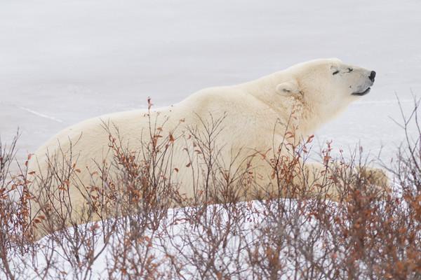 Churchill Wildlife Management Area