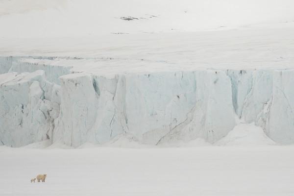 Hochstetter Glacier