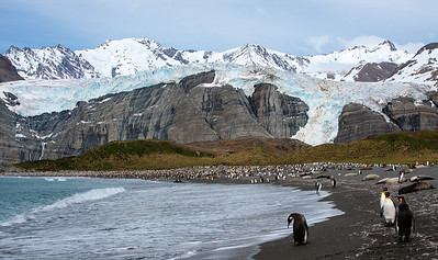 King Penguins and Elephant Seals at Gold Harbour, South Georgia