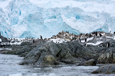 Point Wild, Elephant Island, Antarctica