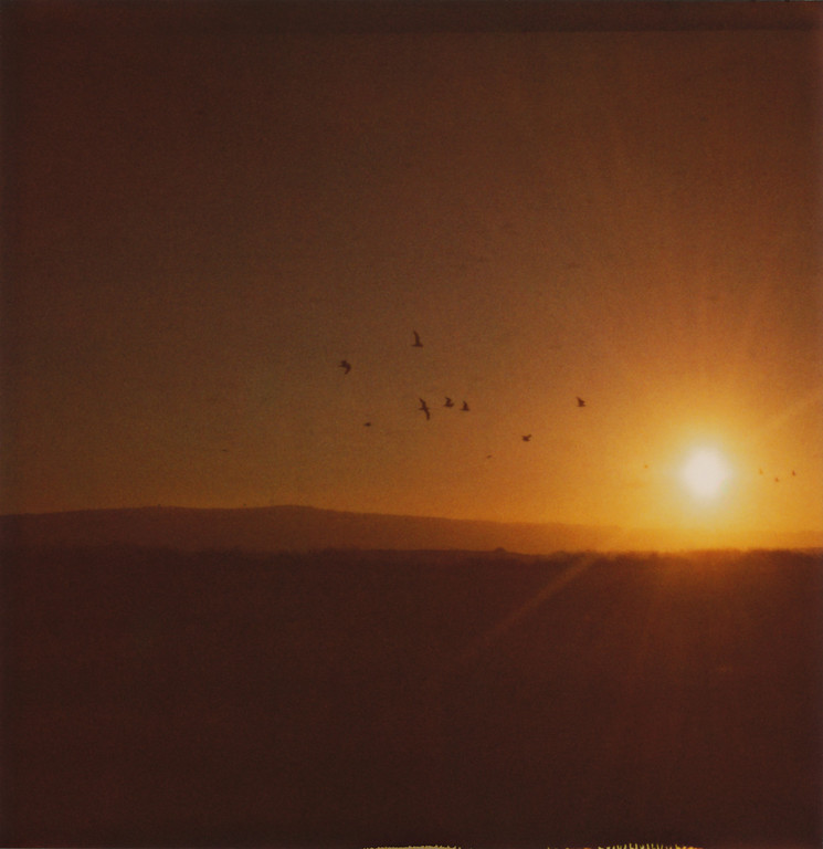 Originally taken during 'Roid Week 2010 at the Alviso Marina County Park. The color of the sun and the sky in this photo just reminds me of toffee, caramel, or amber. Love the colors from 600 film!