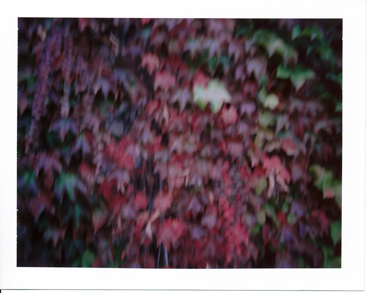 After I got back from my little exploration trip on Marsh Rd., I stopped off at the gas station.  On the way home I saw a section of the road that had a bunch of trees with leaves turning colors, so I parked nearby and took a bunch of pictures for the rest of today's 'Roid Week photos.  <br /> <br /> Still learning how to use the Colorpack II.  Since the ISO's so low, the shutter speeds aren't great for handholding. :-/  I'll have to figure out how to brace it against a tripod or monopod with a bean bag on top or something...