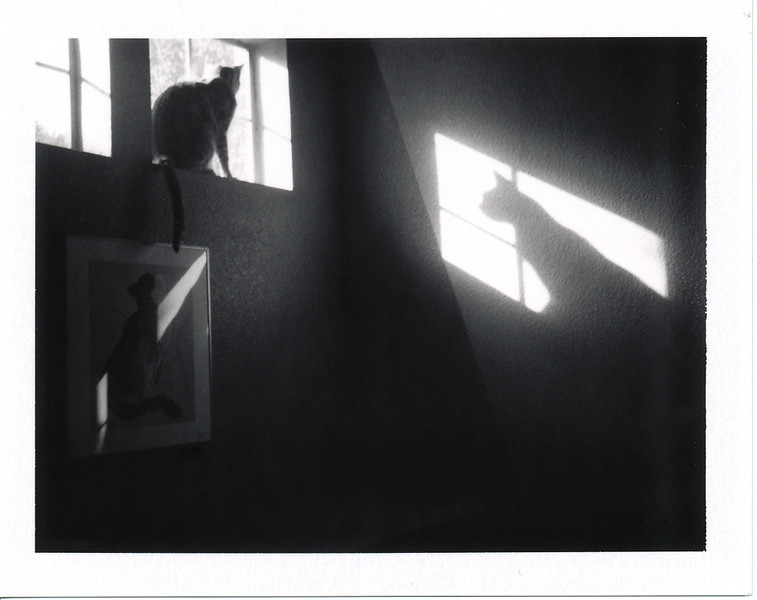 Wasn't feeling up to going on a special trip for today's 'Roid Week photos.  Luckily Pixel went up into the window and presented me with an opportunity. :)