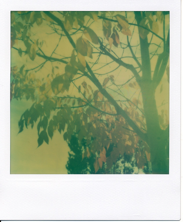 Really liked the sunlight highlighting the leaves on this tree.  Wish the film had maintained more of an aqua cast rather than turning yellow-green... *sigh*
