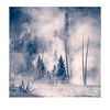 Firehole trees<br /> Polaroid TZ-Artistic
