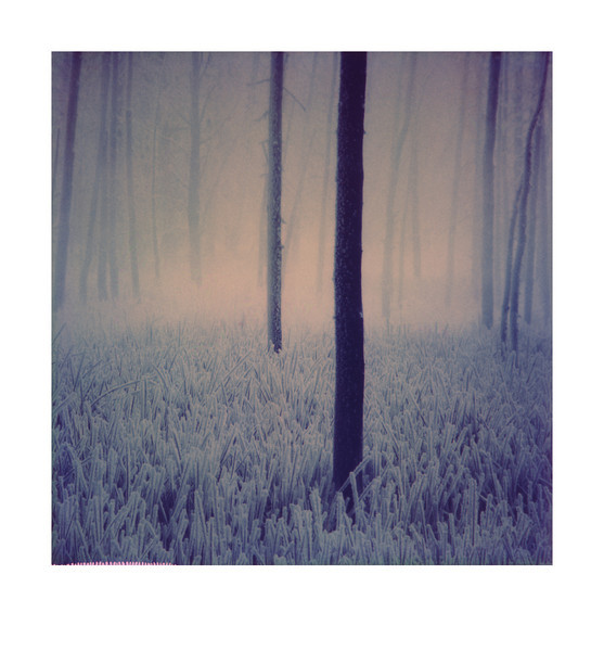 Tangle wood<br /> Polaroid Fade to black, scanned 4 minutes after exposure