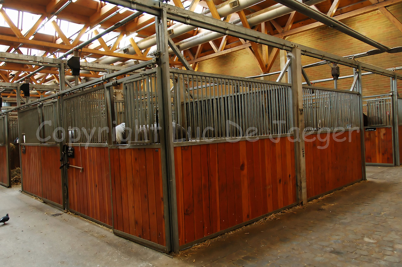 Inside the horse stables of the federal police.