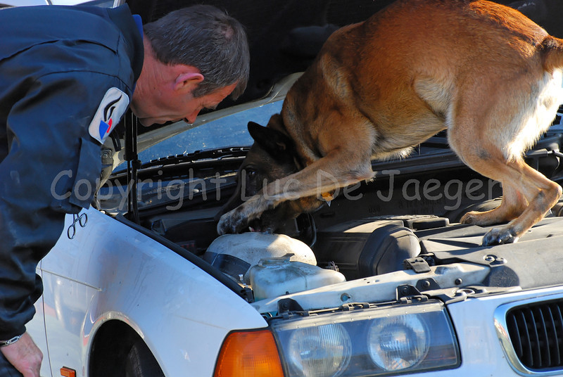A drug dog and his handler of the dog support unit of the federal police investigating a car.