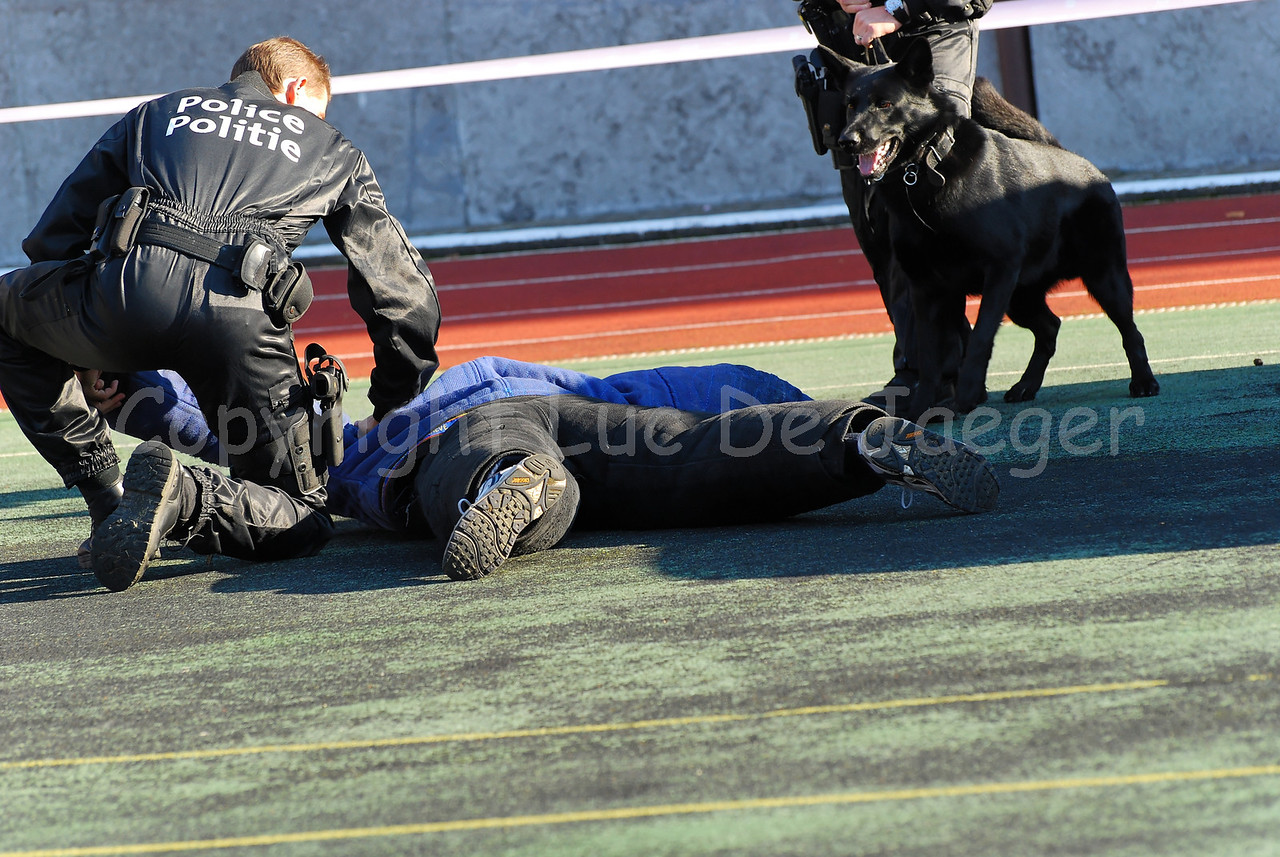 A handler of the dog support unit of the federal police and his dog at work during the arrest of a suspect