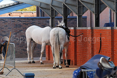Horses of the federal police in the horse stable.