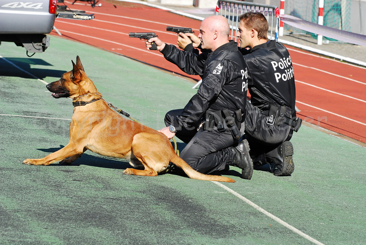 A police dog and two handlers of the dog support unit of the federal police at work during an intervention.