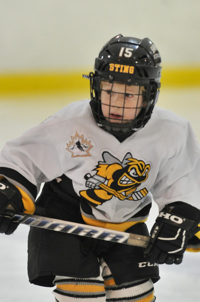 Sarnia Sting Major Atom AA