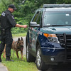 A State Police K9 is returned to his cruiser by his Trooper on  Scenic Ave in Westminster after a suspect fled from a terminated pursuit and crash on Rt 2. The suspect Brian Lafrennie was later apprehended on felony warrants on nearby Saunders St. Gardner. SENTINEL & ENTERPRISE/ JIm Marabello