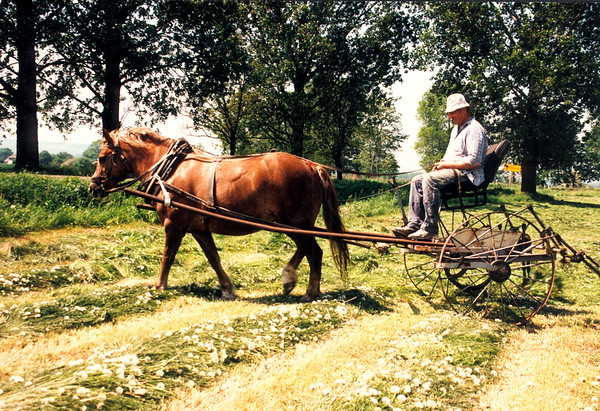 """DOBRKOW - A farmer uses a device that has little """"fingers"""" on the back of his wagon that agitate the freshly-cut hay, to aid in drying."""