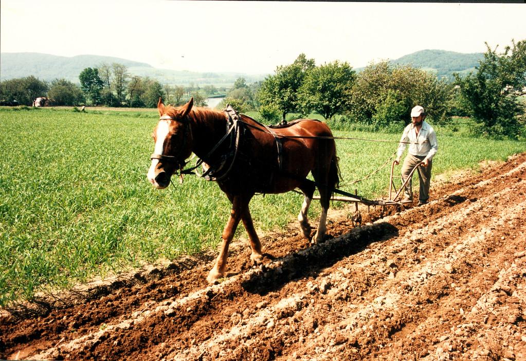 Rip Smock's Polish Ancestral Village Photos