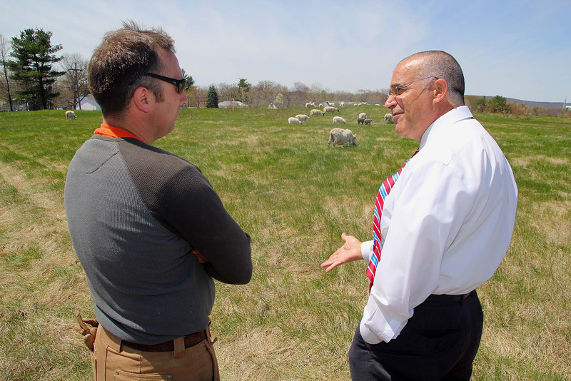 Keith Kopley, of Kalon Farm out of Ashburnham, releasing about 100 sheep and goats onto the former landfill in Leo minster on Wednesday around noon. He released Scottish black face and Katadin sheep onto the land and they got right to grazing. Mayor Dean Mazzarella, on right, chats with Keith as the sheep got to eating. SENTINEL & ENTERPRISE/JOHN LOVE