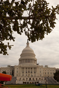 Christmas arrived early to the US Capitol West Lawn with the arrival of the 47th Capitol Christmas tree. The 63 foot Sierra white fir from California's Stanislaus National Forest arrived in Washington D.C. on Monday morning on November 28, 2011, following a 20-day tour across the country. The tree will eventually be decorated with more than 10,000 LED lights and some 2,000 handmade ornaments. (Photo by Jeff Malet)