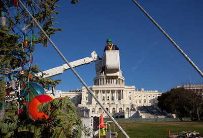 Members of the Capitol Grounds Tree Division prepare the 47th Capitol Christmas tree for decoration on December 2, 2011. The 63 foot Sierra white fir from California's Stanislaus National Forest arrived in Washington D.C. a few days earlier, following a 20-day tour across the country. The tree will  be decorated with more than 10,000 LED lights and some 2,000 handmade ornaments from California. (Photo by Jeff Malet)