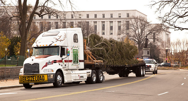 Christmas arrived early to the US Capitol West Lawn with the arrival of the 47th Capitol Christmas tree. The 63 foot Sierra white fir from California's Stanislaus National Forest arrived in Washington D.C. on Monday morning on November 28, 2011, following a 20-day tour across the country. The tree will eventually be decorated with more than 10,000 LED lights and some 2,000 handmade ornaments from the State of California. (Photo by Jeff Malet)