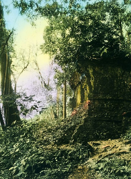 Palenque temple, unrestored. The amazing thing is that in the woods any small hill you stand on is probably a temple. Tree roots at your feet disappear down a sunken window, to what kind of buried history?