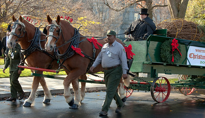 The tree arrived at the WH via a jingling horse-drawn carriage, the horses covered in red bows, the driver in black tophat.