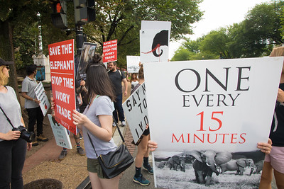 International March for Elephants