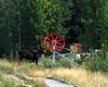 Running moose
