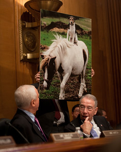 "US Senator Orrin Hatch (R-UT) (left) mocks a Senate Finance Committee Hearing as a ""Dog and Pony Show"" by displaying a large picture of a dog and pony. Senator Charles 'Chuck' Grassley (R-IO) (right) is amused. The heads of five of the largest oil and gas companies in the world testified before the Senate Finance Committee on May 12, 2011 on Capitol Hill in Washington DC, arguing that ending tax incentives would reduce exploration, eliminate jobs and stifle economic growth while doing nothing to reduce fuel prices. Participating were executive officers of Exxon, BP America, Shell, ConocoPhillips and Chevron. (Photo by Jeff Malet)"