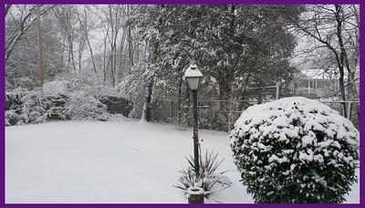 Snow in Nashville TN January 2016