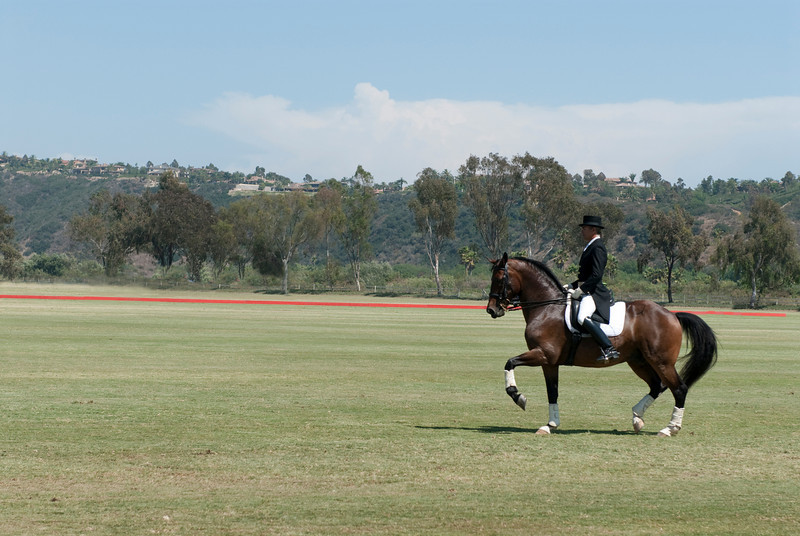 2009, Polo-Beautiful Horse and Rider Too 9619