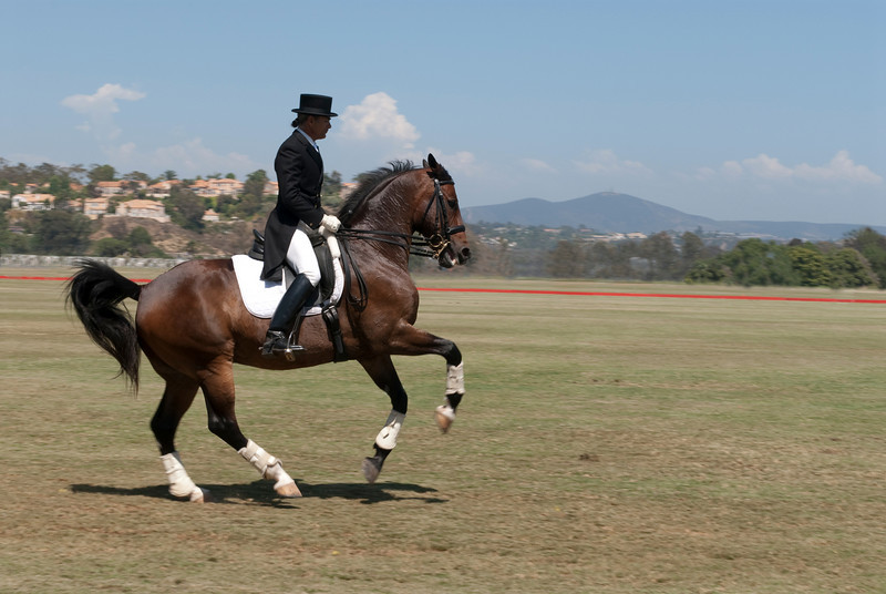 2009, Polo-Horse and Rider 9609
