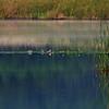Early morning waiting on a pond near village of Unieszewo<br /> Wczesny ranek na 100 hektarowym stawie kolo Unieszewa