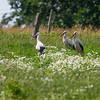 Stork Village - Żywkowo, Polska / Żywkowo bociania wieś, Żywkowo, Polska