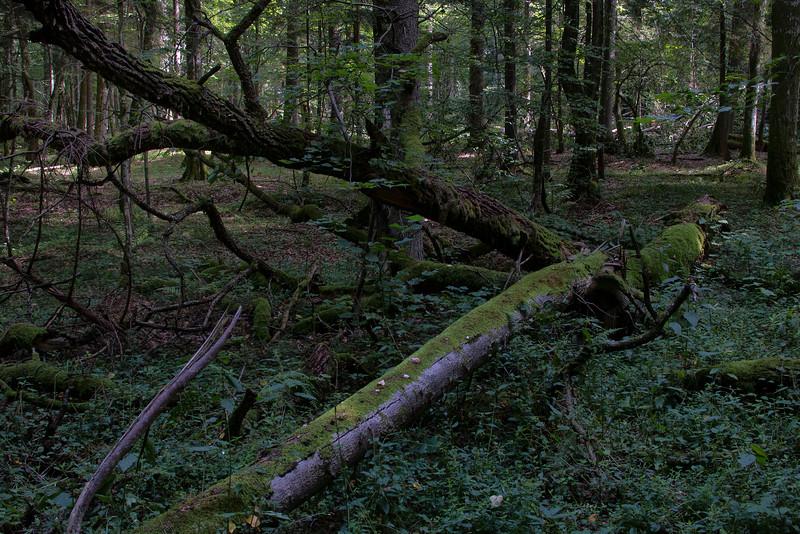 Białowieża National Park, Białowieża, Polska / Białowieski Park Narodowy Białowieża, Polska