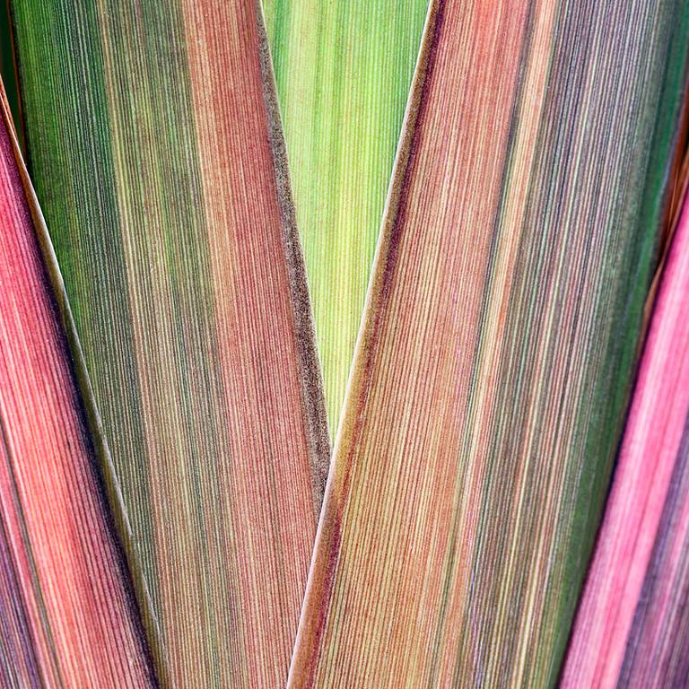 Stripes 5