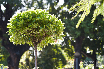 Photowalk jardins de la Présidence