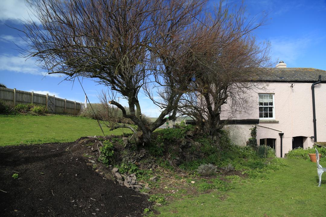 Polzeath House back garden