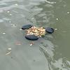 Full pond skimmer