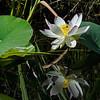 Relaxing Lotus