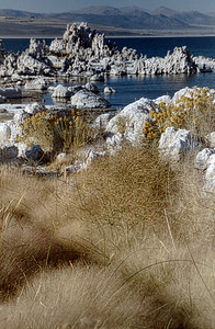 Mono Lake Grasses, CA