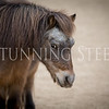 StunningSteedsPhoto-2315