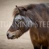 StunningSteedsPhoto-2316
