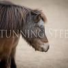 StunningSteedsPhoto-2314