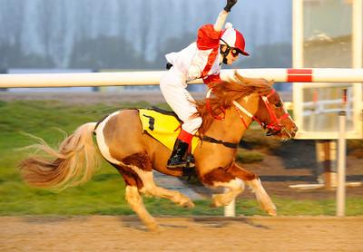 Lopp 1: Tingeling vinner med Sofia Prestis | Jägersro 111106  Foto: Stefan Olsson / Svensk Galopp